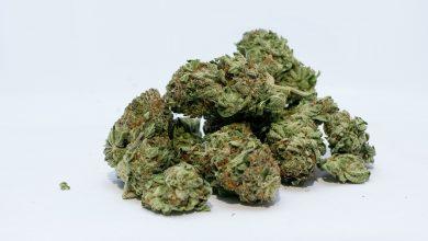 Photo of Συλλήψεις για ναρκωτικά