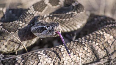 Photo of Τον δάγκωσε φίδι