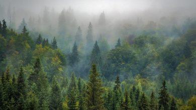 Photo of Περιπέτεια για Κινέζους στο δάσος Πάφου