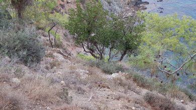 Photo of Τραγωδία στον Ακάμα. Νεκρό ζεύγος τουριστών. Το όχημα τους έπεσε από γκρεμό βάθους 30 μέτρων