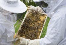 Photo of Προστασία μελισσιών από πυρκαγιές