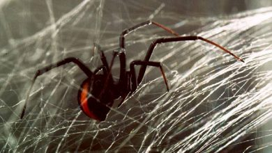 Photo of Βίντεο από την παγίδα της αράχνης