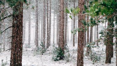 Photo of Πέφτουν τα πρώτα χιόνια