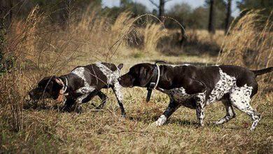 Photo of Απαγορεύεται η άσκηση κυνηγετικών σκυλιών