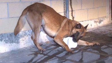 Photo of Γιαγιά δέχθηκε επίθεση από σκύλο ενώ συνόδευε τα εγγόνια της