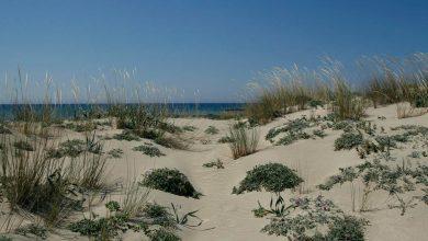 Photo of Προστασία των αμμοθινικων οικοτοπων στον Κόλπο Χρυσοχους