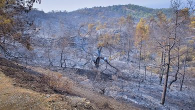 Photo of Κοινοτική Δράση Ακάμα: «Λύπη για τις πυρκαγιές στην περιοχή»