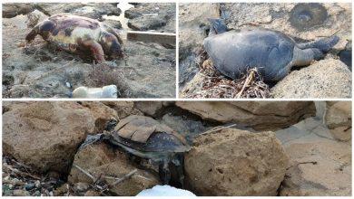 Photo of Μυστήριο με χελώνες στο Δημμα