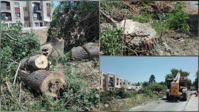 Photo of Οι Οικολόγοι για  «σφαγή» αιωνόβιων δέντρων στην Πάφο